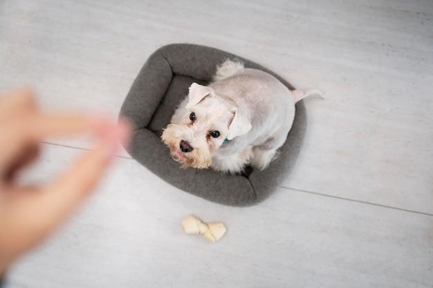 Gros plan sur une main floue et un chien mignon