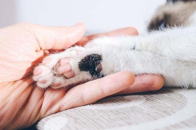 Gros plan d'une main humaine tenant la patte d'un chaton