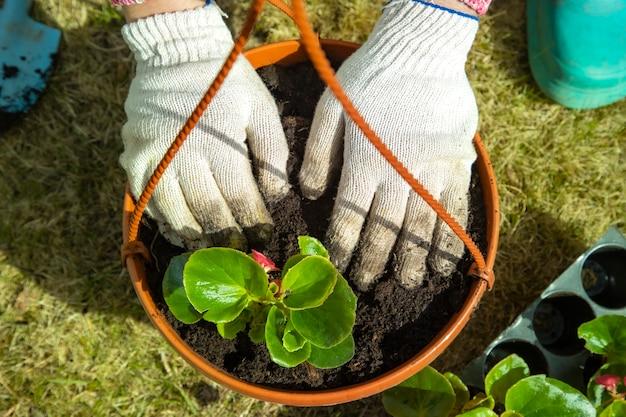 Gros plan d'une main de jardiniers dans des gants de ménage plantant une fleur dans une vue de dessus de pot