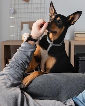 Gros plan main jouant avec chien