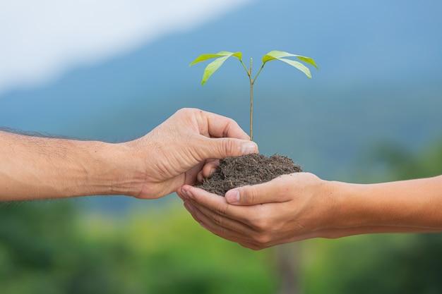 Gros plan de la main passant le jeune arbre de la plante à une autre main