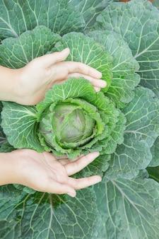 Gros plan, main, paysan, jardin, pendant, matin, temps, nourriture, fond