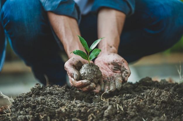 Gros plan main plantation arbre croissance semis