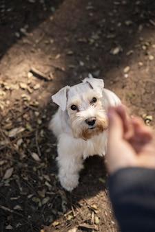 Gros plan main tenant la nourriture pour chien