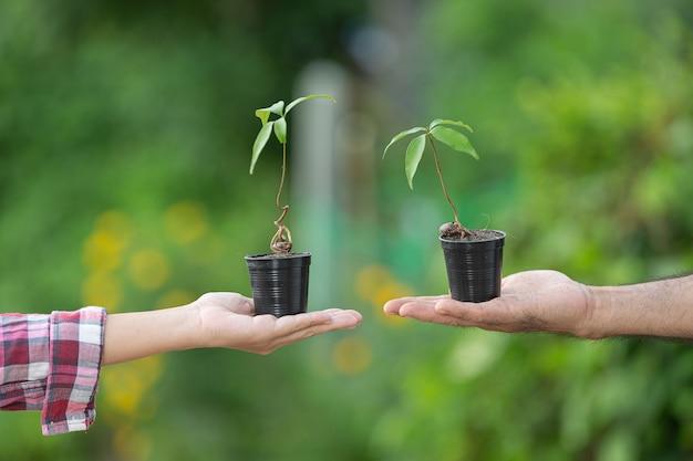 Gros plan de la main tenant la plante