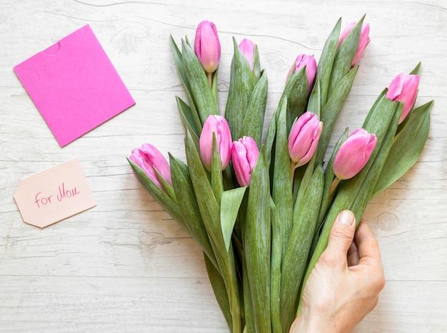 Gros plan main tenant des tulipes