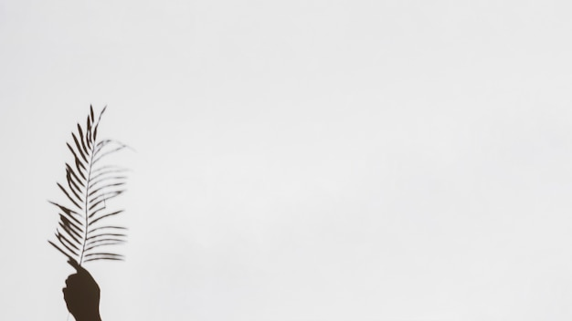 Gros plan, de, main, tenue, feuille paume, sur, fond blanc