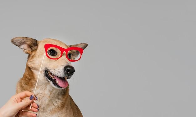 Gros plan, main, tenue, lunettes