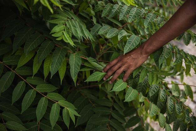 Gros plan main toucher plante