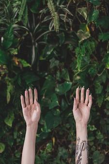 Gros plan, mains, contre, plante