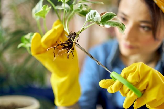 Gros plan de mains féminines dans des gants en caoutchouc jaune tenant des semis et utilisant des ciseaux pour