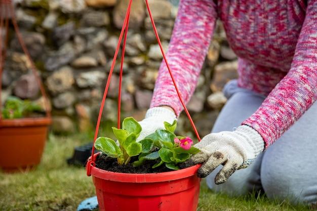 Gros plan de mains féminines dans des gants de ménage plantant des fleurs dans un pot extérieur sur un pré vert. pas de visage