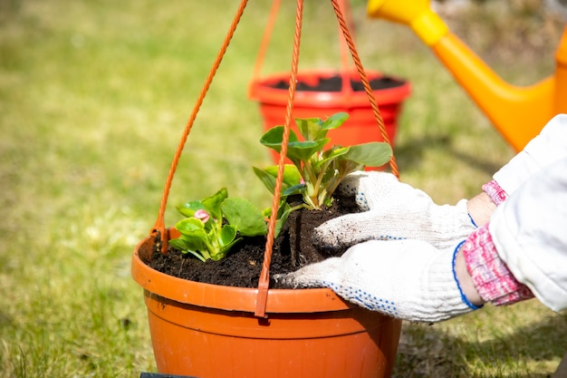 Gros plan des mains d'un jardinier plantant des fleurs dans un pot sur l'herbe verte