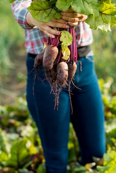 Gros plan, mains, tenue, légumes