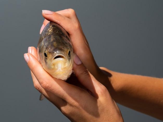 Gros plan, mains, tenue, poisson frais