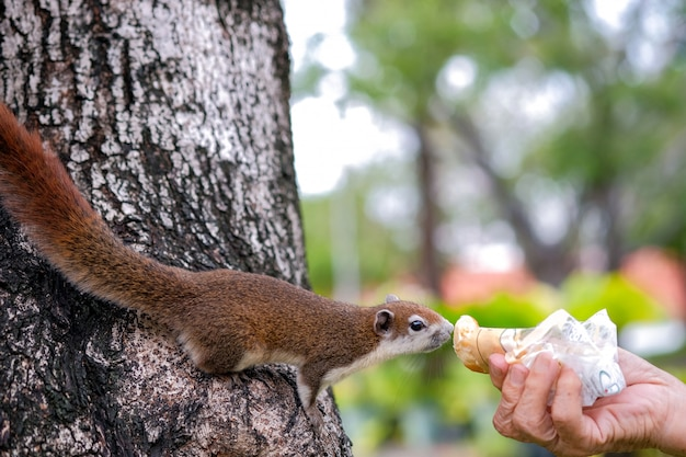 Gros plan, mains, vieil, homme, envoyer, pain, donner, écureuil, sur, a, arbre, sur, parc public