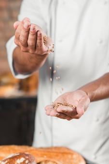 Gros plan, mâle, boulanger, main, tomber, blé, grains