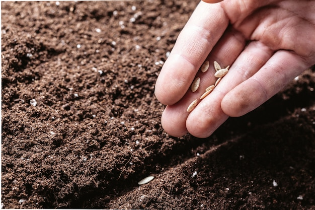 Gros plan, mâle, main, planter, graines