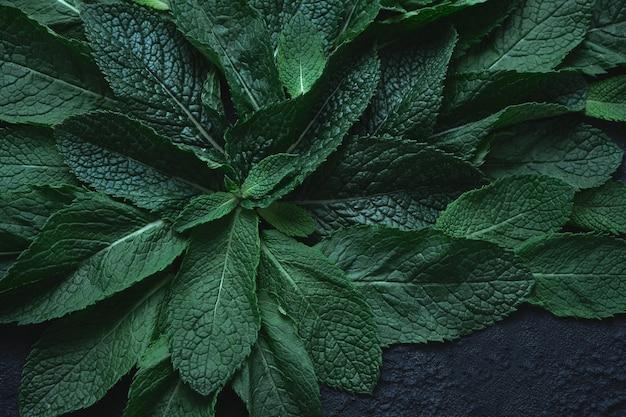 Gros plan de menthe verte fraîche sur une surface vert foncé