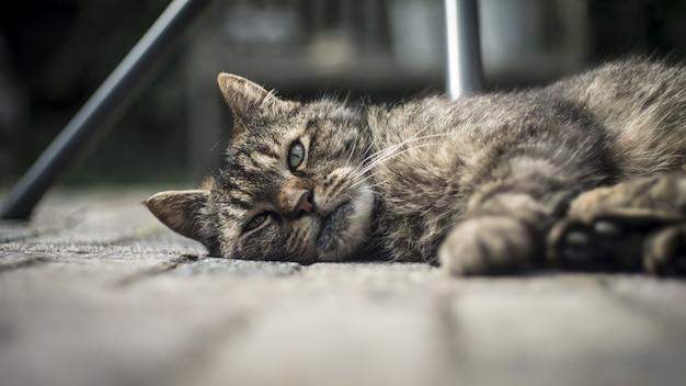 Gros plan d'un mignon chat domestique allongé sur le porche en bois avec un arrière-plan flou