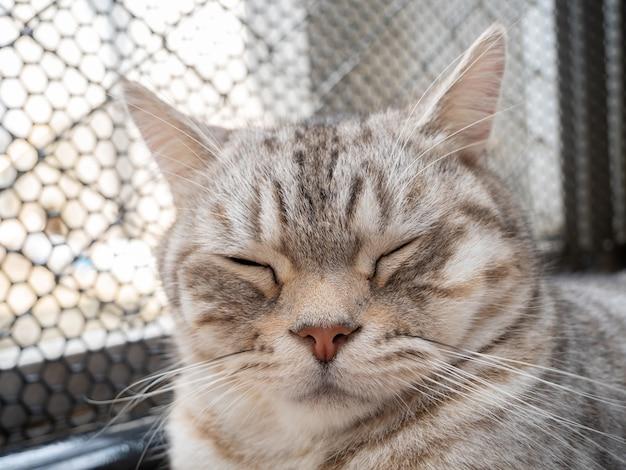 Gros plan mignon chat tigré dormir sur plancher en bois