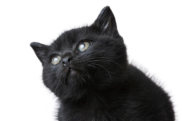 Gros plan d'un mignon chaton noir isolé sur un blanc