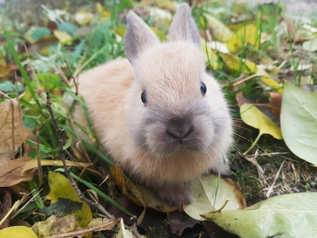 Gros plan mignon petit lapin assis sur l'herbe.