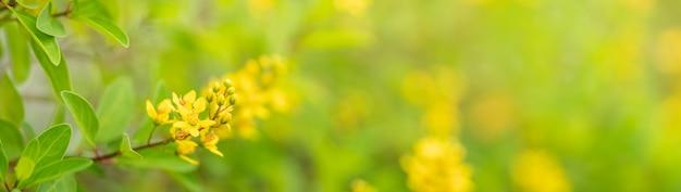 Gros plan de mini fleur jaune sous la lumière du soleil avec copie espace en utilisant comme arrière-plan paysage de plantes naturelles
