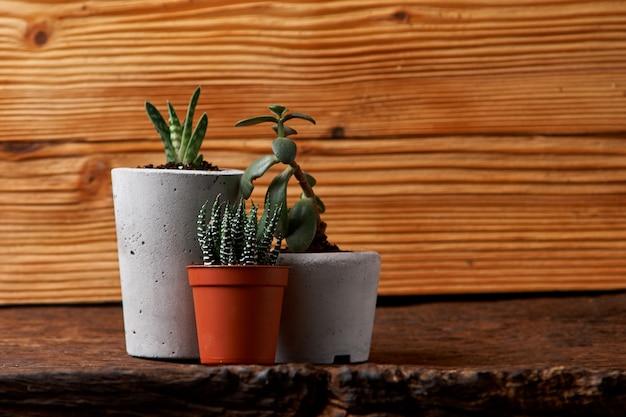 Gros plan de minuscules plantes succulentes dans des pots en béton faits maison à la maison