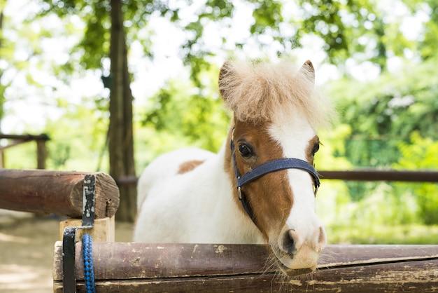 Gros plan sur une mise au point peu profonde d'un cheval regardant l'avant