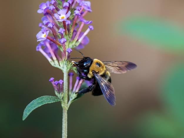 Gros plan de la mise au point sélective d'une abeille sur une fleur rose - parfait pour l'arrière-plan
