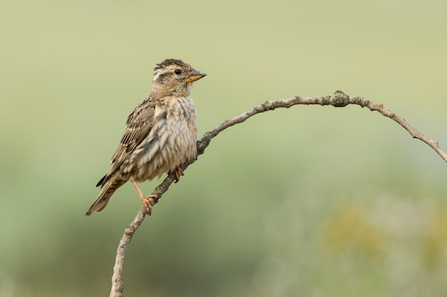 Gros plan mise au point sélective d'un bel oiseau
