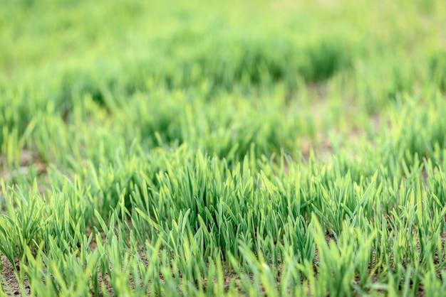 Gros plan sur le motif de détails de l'herbe
