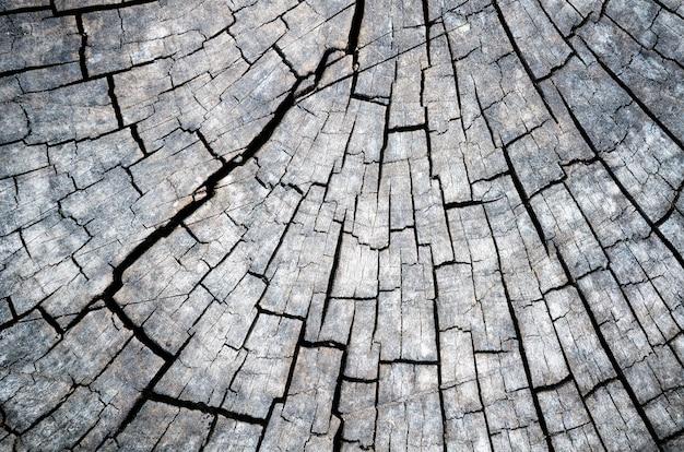 Gros plan sur le motif de texture de souche d'arbre noir et blanc. détail du bois avec aspect grain ancien et vintage. résumé pour le fond de la nature