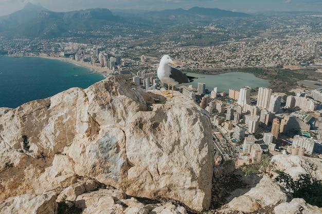 Gros plan d'une mouette au sommet d'un rocher avec vue sur la ville de l'île de calpe, espagne