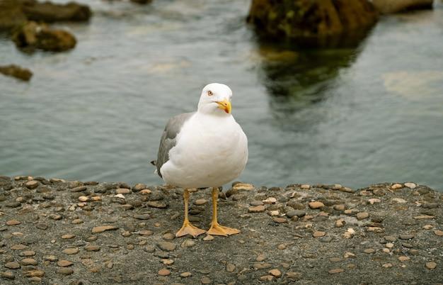Gros plan d'une mouette à pattes jaunes sur des rochers près de la mer pendant la journée