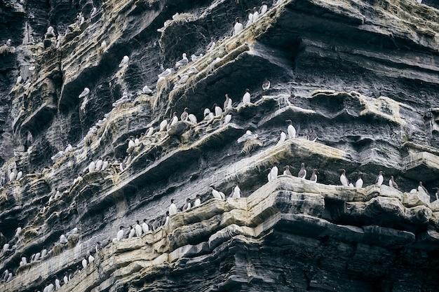 Gros plan de mouettes sur les falaises de moher sous la lumière du soleil pendant la journée en irlande