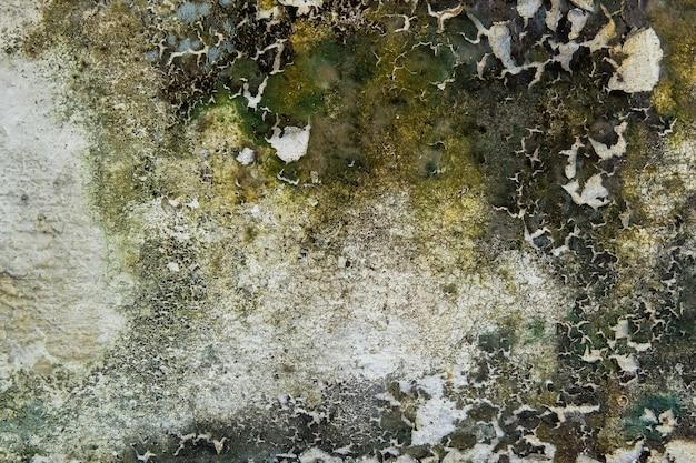 Gros plan de la mousse sèche sur le mur de fissure de ciment blanc et la peinture décollée causée par l'eau et la lumière du soleil. décollez le mur de peinture de la maison blanche avec une tache noire. fond de texture.