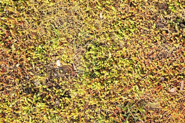 Gros plan d'un mur avec de la mousse et des plantes qui poussent