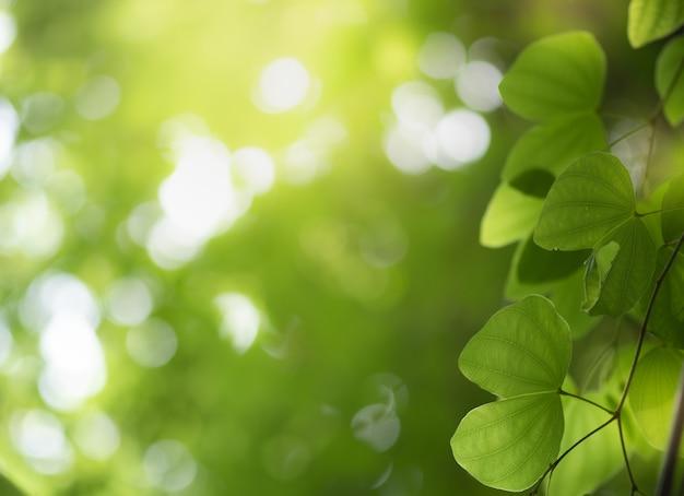 Gros plan de la nature feuille verte et soleil