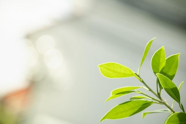 Gros plan de la nature vue feuille verte sur fond de verdure floue sous la lumière du soleil avec bokeh et copie espace fond paysage de plantes naturelles, concept de couverture écologique.