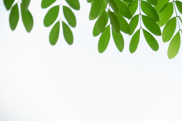 Gros plan de la nature vue feuille verte sur fond de verdure floue sous la lumière du soleil avec un ciel clair blanc et copie espace fond paysage de plantes naturelles, concept de couverture écologique.