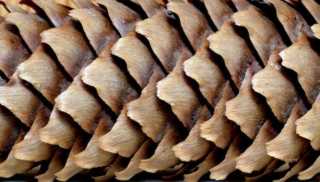 Gros plan, de, les, naturel, automne, forêt, fond, depuis, les, épicéa, cône.