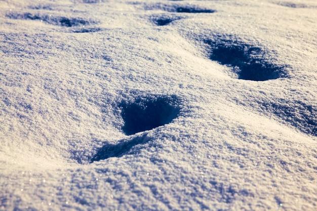 Gros plan sur la neige en hiver