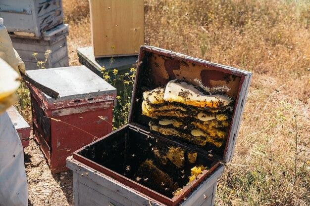 Gros plan d'un nid d'abeilles naturel plein d'abeilles