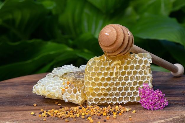 Gros plan sur les nids d'abeilles remplis de miel et de pollen