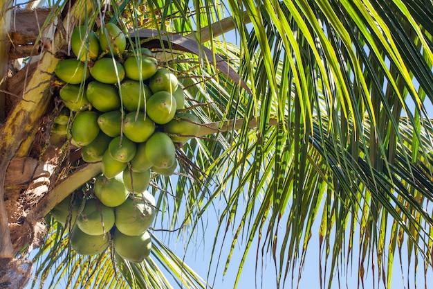 Gros plan, de, noix coco