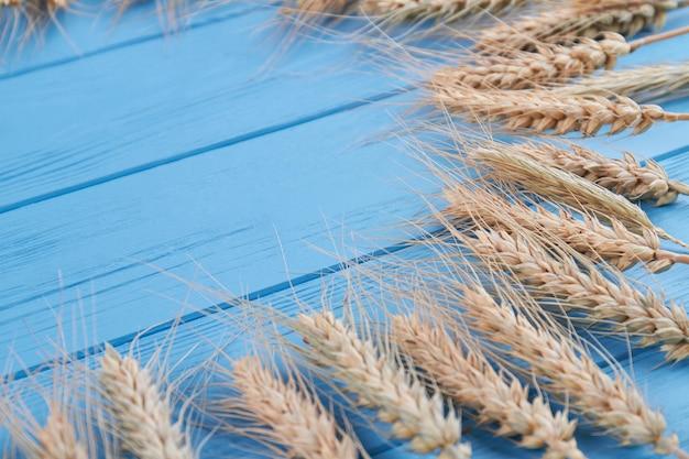 Gros plan de nombreuses oreilles d'épillets de blé sur un bureau en bois bleu