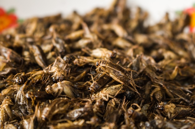 Gros plan de nombreux grillons d'insectes frits il s'agit de protéines élevées.