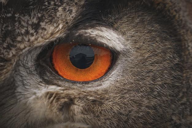 Gros plan de l'œil d'un hibou grand-duc dans la journée